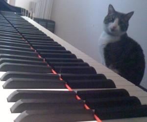Cat at a piano